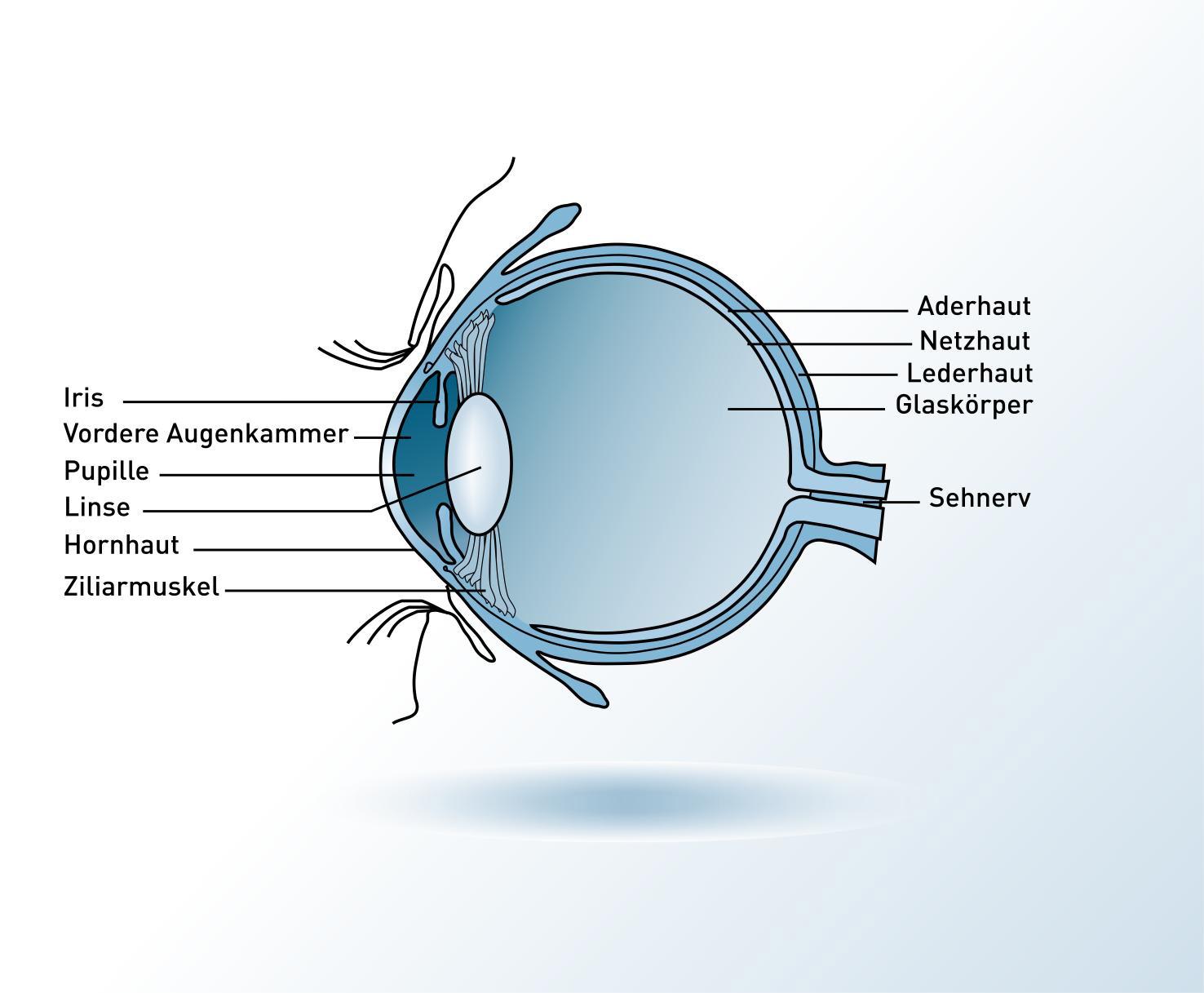 Bild Auge
