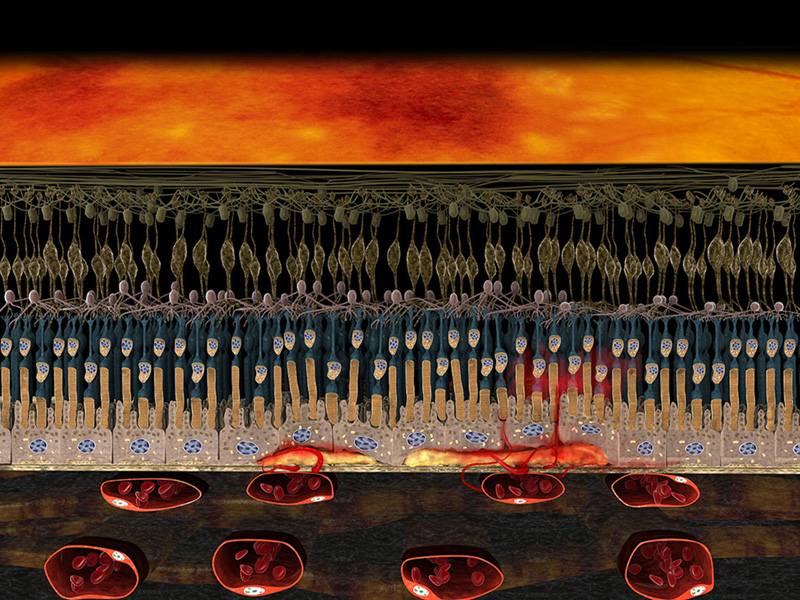 3D Darstellung Feuchte AMD