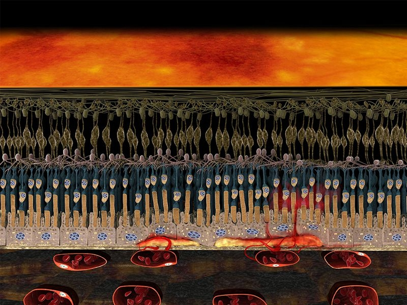 3D-Darstellung_Feuchte-AMD